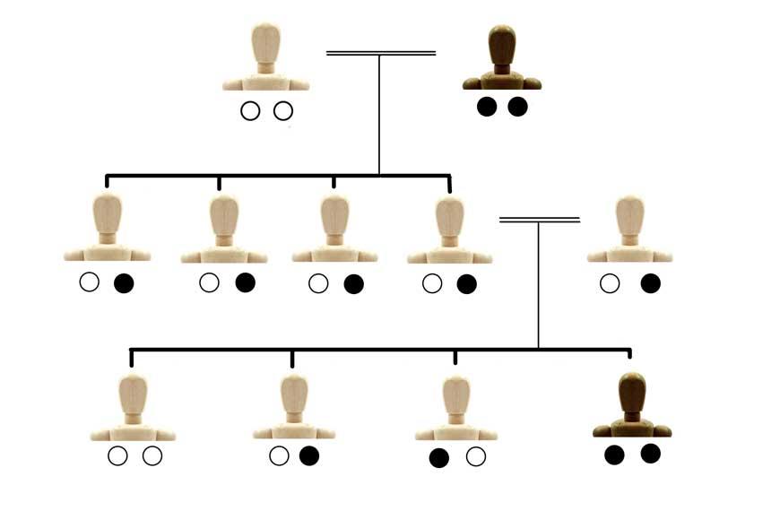 「優性遺伝」と「劣性遺伝」