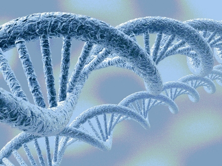 DNAの形
